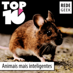 TOP 10 – Animais mais inteligentes
